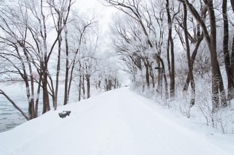 cold-snow-forest-treesiul87o78o78