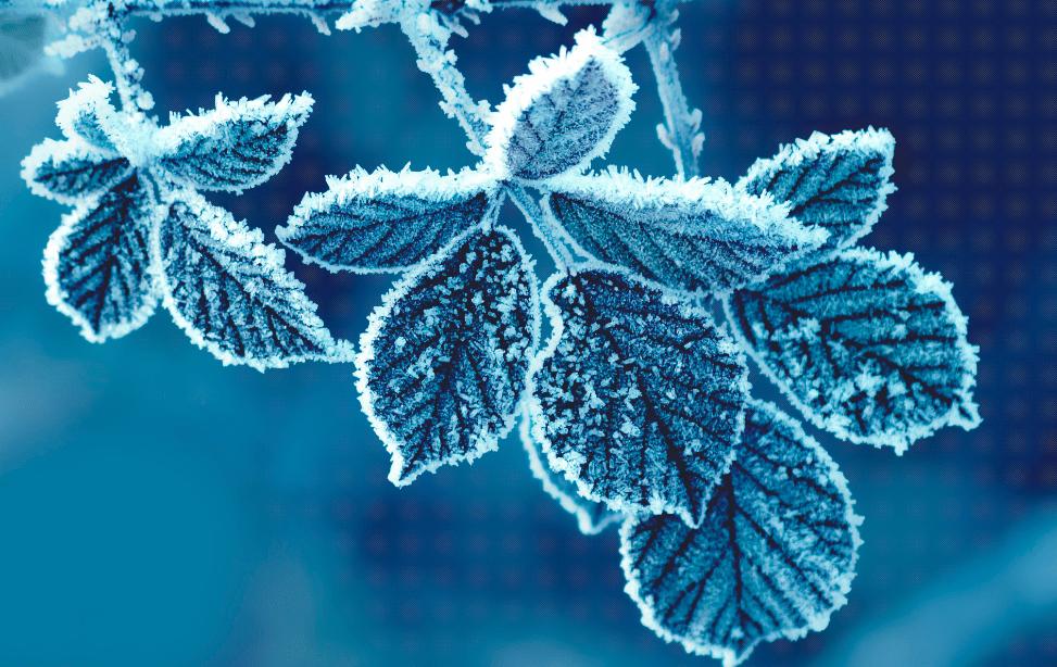 СНЕГ ВО МАВРОВО И КРУШЕВО  Студено утро со негативни температури