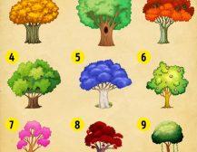 Изберете дрво и дознајте што ќе доживеете во 2018-та година
