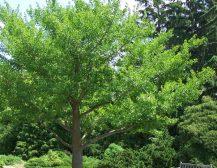 """НЕКРОФИЛИТЕ ЗАНЕМЕА ПРЕД ШИЛЕГОВ: Нема реакција од НВО за дрвото од 650.000 евра, ниту пресметки во """"колку Тамари"""" чини"""