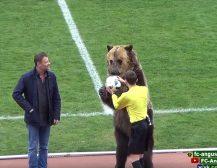 (Видео)МЕЧКА ГО ОТВОРИ НАТПРЕВАРОТ: Мечка означи старт на фудбалски меч во Русија подавајќи му ја топката на судијата