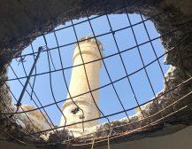 СТАВЕТЕ КРАЈ НА ОПЕРАЦИЈАТА ВО АФРИН: ОН ја повика Турција да се повлече од воената операција во сириски Африн