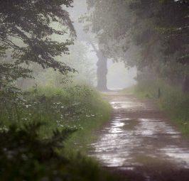 Денеска дожд и грмежи, од утре потопло