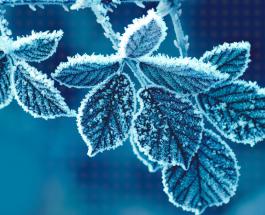 СНЕГ ВО МАВРОВО И КРУШЕВО: Студено утро со негативни температури