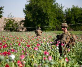 """КАМПАЊАТА НА СДС ФИНАНСИРАНА СО ПАРИ ОД ДРОГА?: Фирмата """"Еколог"""" обвинета од НАТО за шверц со дрога, ја финансирале кампњата на Заев?"""
