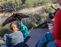 (Видео)ОРЕЛ ОДЛЕТА СО ДЕТЕ: Орел со канџите фати дете и се обиде да одлета со него!