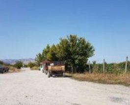 ЗОШТО СЕ МОЛЧИ ЗА КРИМИНАЛОТ КОЈ ГО ПРАВИ ПОВАРДАРИЕ: Без лиценца се откупува грозје, лозарите изложени на ризик