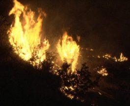 НОВ ПОЖАР: Гори во Пехчево, во опасност голема површина на борова шума!
