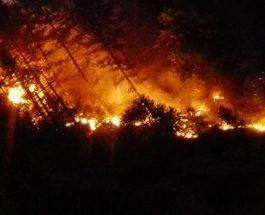 ДОДЕКА МАКЕДОНИЈА СЕ ФЕДЕРАЛИЗИРА: Трагедијата со пожарите се интензивира – ЕВН ќе ја исклучи и струјата во регионите каде што беснеат пожари!
