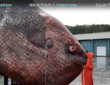 """(Видео)ГРДОСИЈА ОД ЕДЕН ТОН: Руските рибари фатиле """"грдосија"""" тешка еден тон!"""