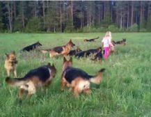 ЈА ОСТАВИЛ СВОЈАТА 5-ГОДИШНА ЌЕРКИЧКА СО 14 КУЧИЊА: Кога се вратил не можел да верува што гледа